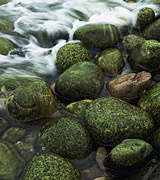 Photo of water flowing over mossy stones.