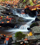 Small forest brook in autumn.
