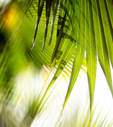Blurred palm fronds.