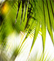Blurred palm fronds