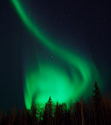 Aurora borealis above dark trees.