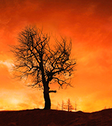 Dark tree backlit by a forest fire.