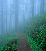 Footpath into a foggy forest.