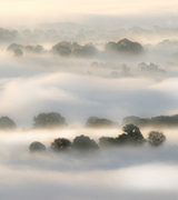 Misty trees at dawn.