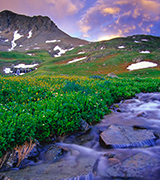 Stream flowing through a mountain meadow.