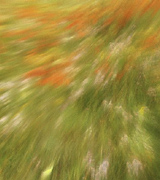 Blurred motion photo of a flowered meadow.