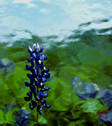 Blurred blue flowers against a watery background.
