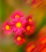 Blurred pink flowers.