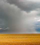 Dark rainstorm over golden fields.