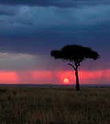 Rain at sunset over an African tree and plains.