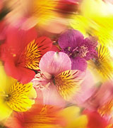 Blurred photo of a brightly-colored floral bouquet spinning in a circle.