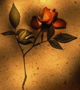 Photo of a red rose against a shadowed wall.