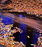 Blue autumn stream with colored leaves.