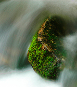 Stream flowing past a mossy rock.