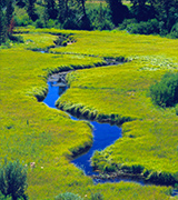 Meandering stream through a meadow.