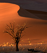 Desert tree at sunset.